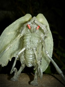 Night of the Mothman – Die Nacht des Mottenmanns