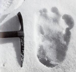 Yeti – Spurensuche im Himalaya